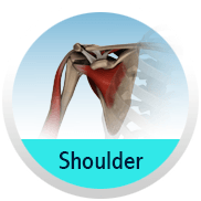 Shoulder - Shoulder & Elbow Clinic